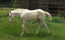 White Filly Full Body Shot