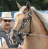 Light eyes on a palomino