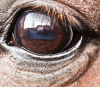 horse eye closeup