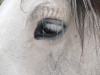Horse with a dark eye in a white face