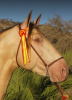 Green eye in a buckskin pearl horse
